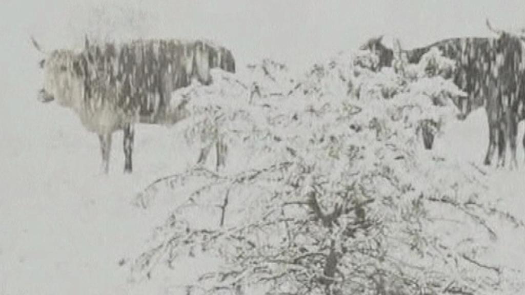 Neobvykle silné sněžení v JAR