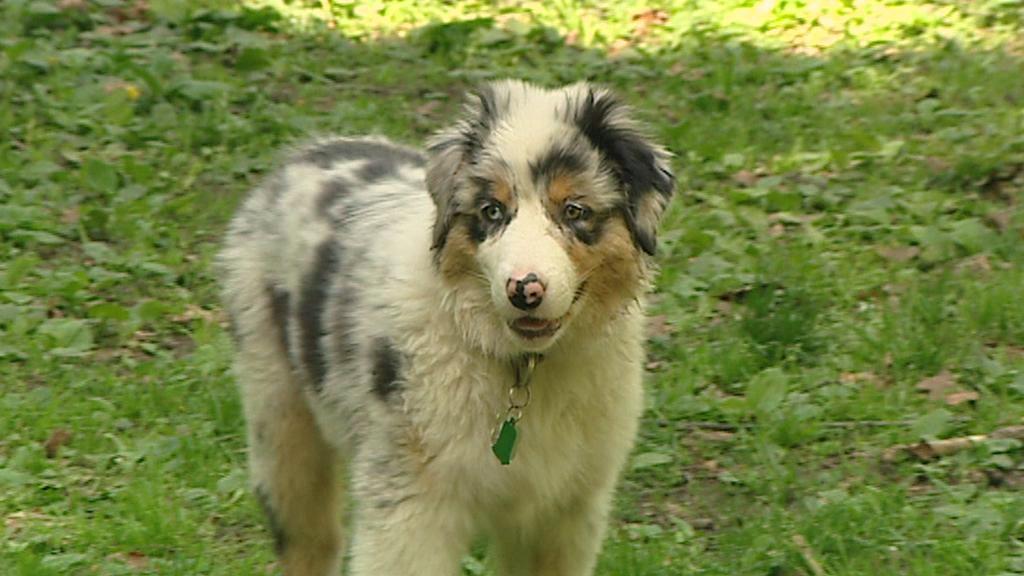 Pes v parku