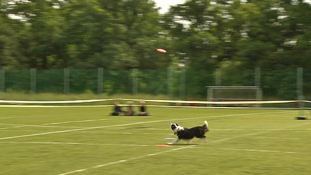 Dogfrisbee