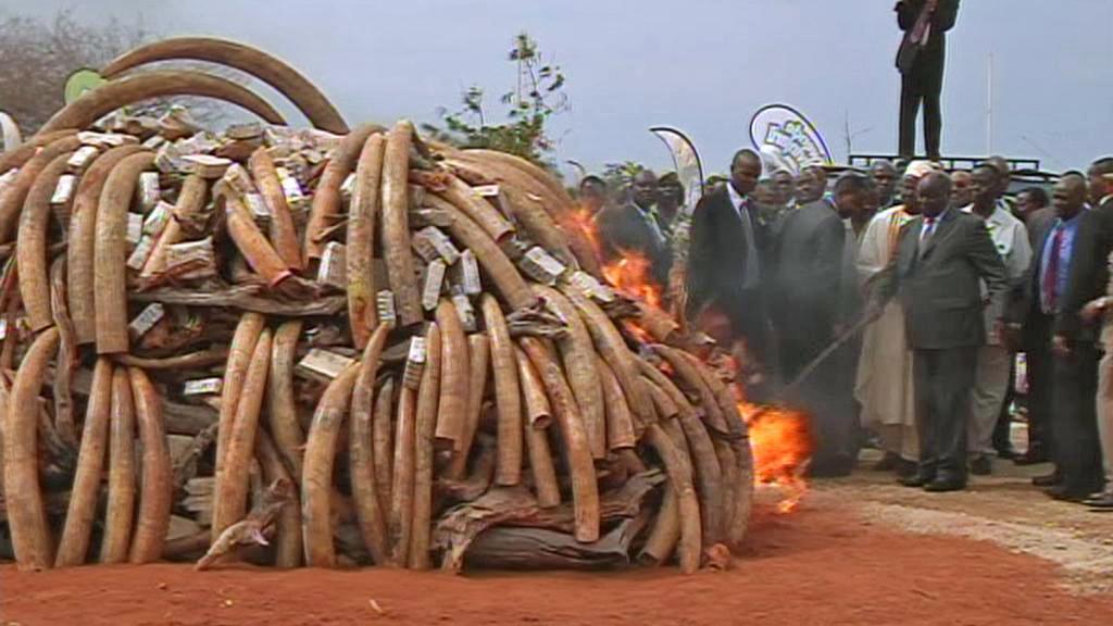 Keňský prezident Mwai Kibaki podpaluje hranici se slonovinou