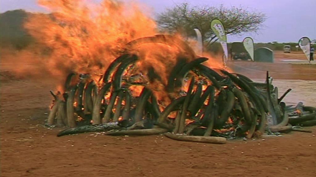Hořící hranice se slonovinou v Keni