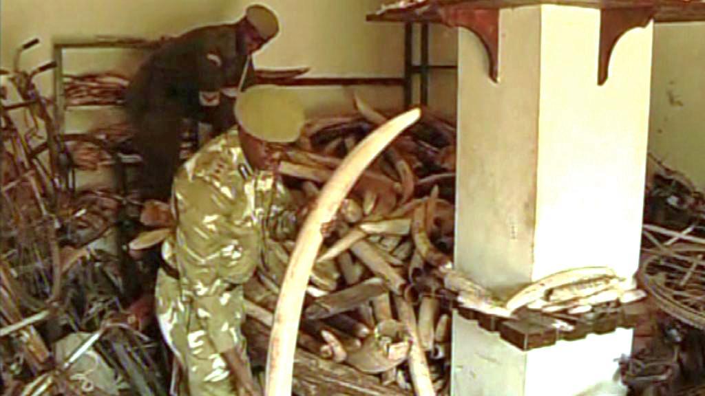 Keňští vojáci se zabavenou slonovinou