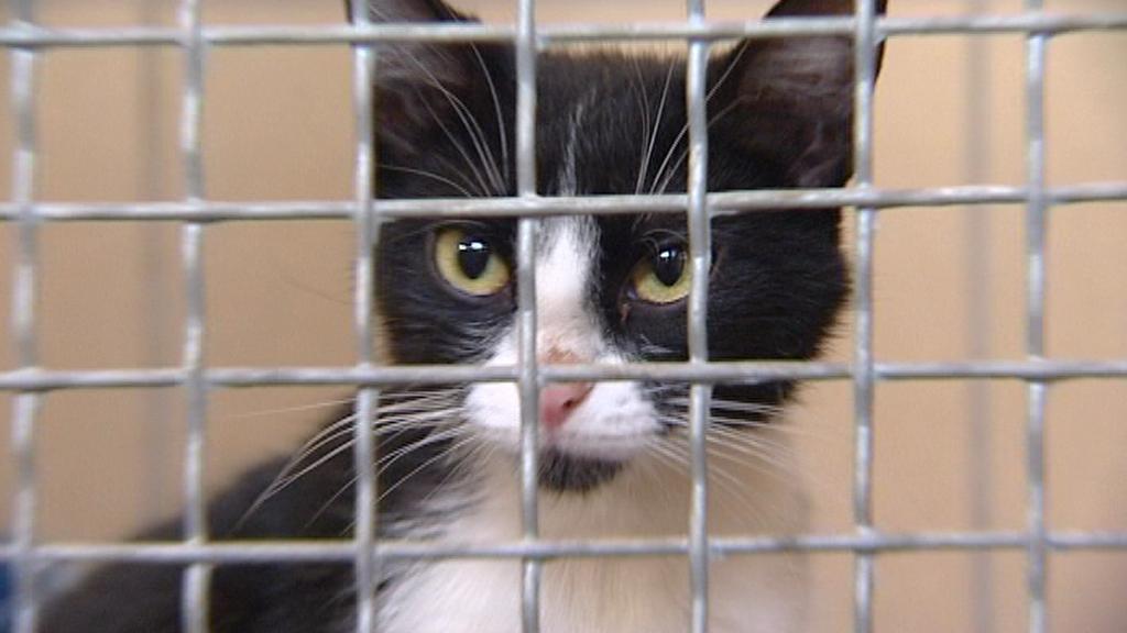Kočka v útulku