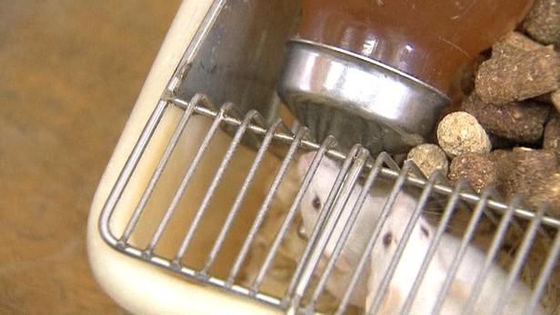 Myši si pochutnávají na vodě se skořicí