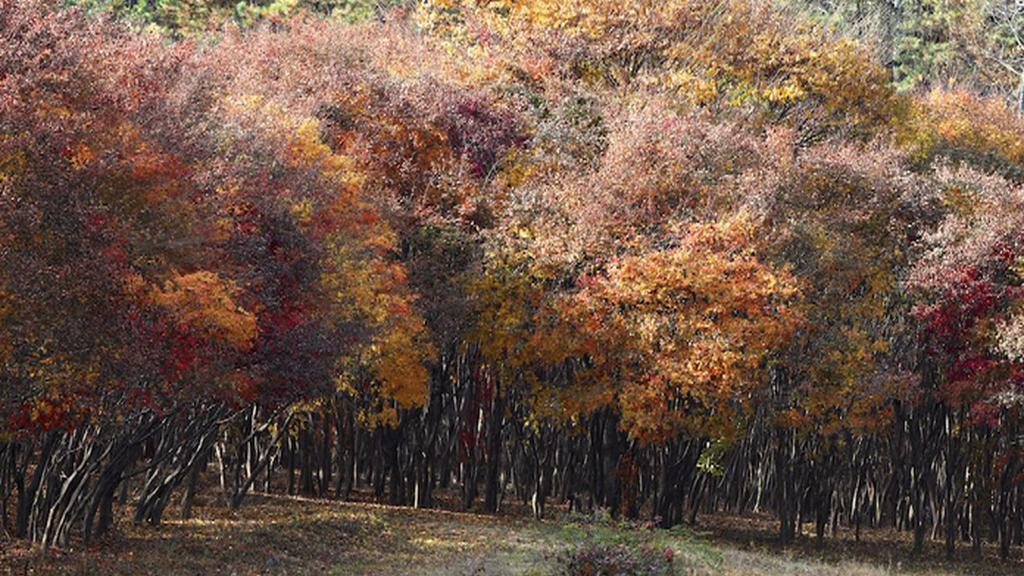 Fotgrafie korejského fotografa Ahaea