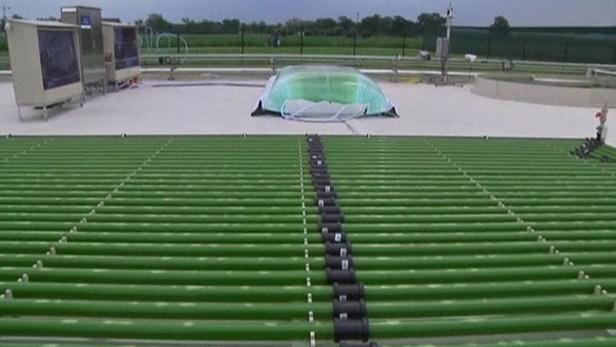 Biopalivo může vzniknout i z řas