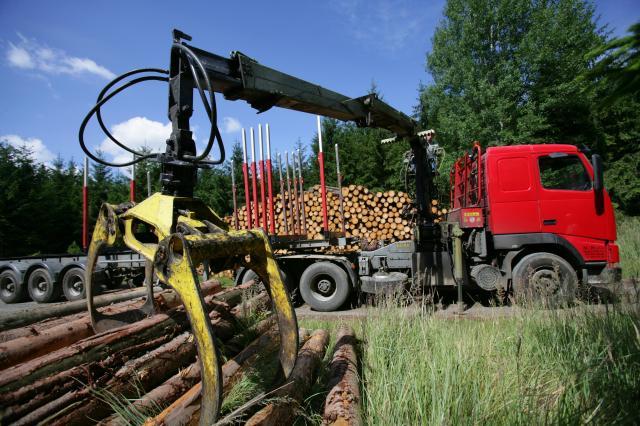 Práce v lesích