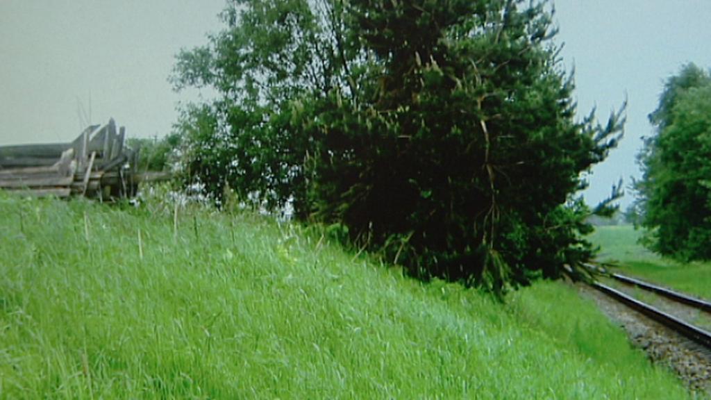 Výhled na trať zakrývá strom