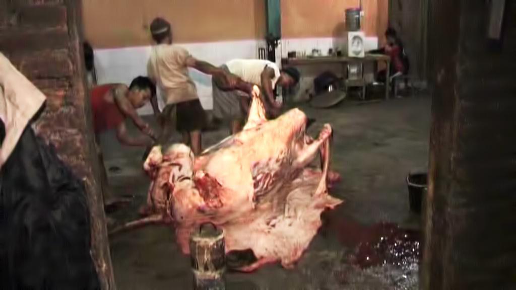 Kruté záběry z indonéských jatek