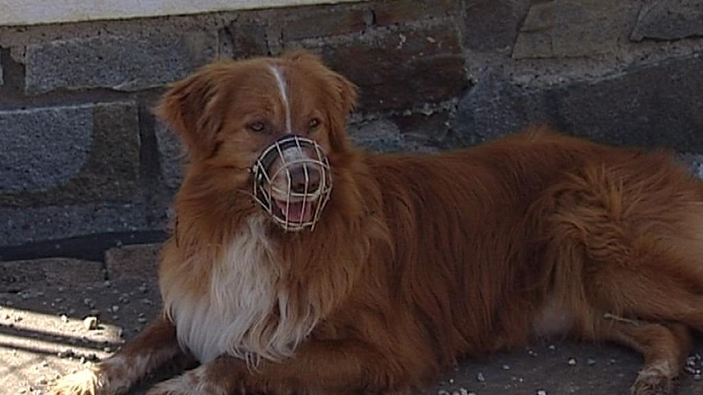 Přiotrávený pes