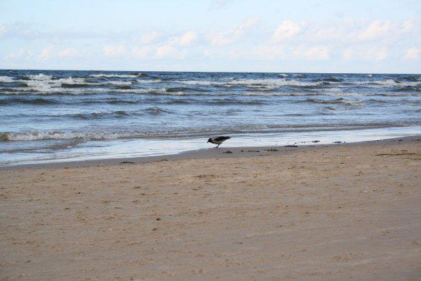 Pláž u Baltu