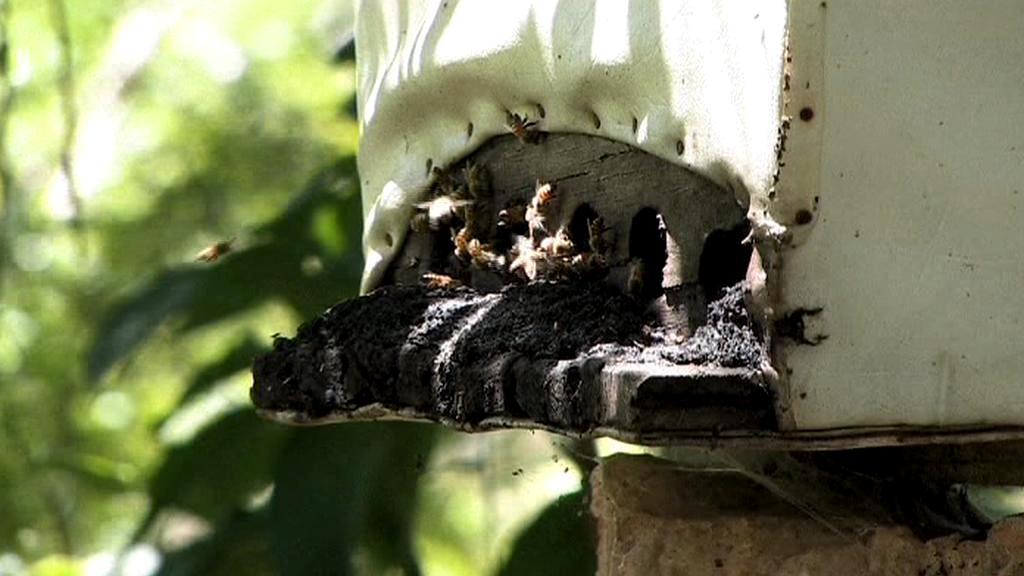 Včelí úl