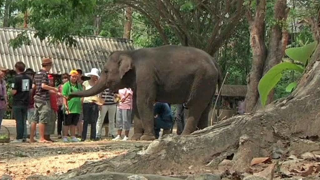 Sloni pomáhají autistům