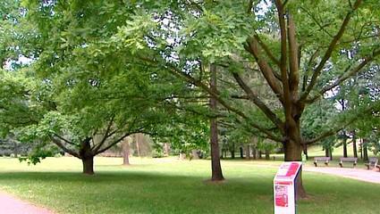 Tyršovy sady v Pardubicích