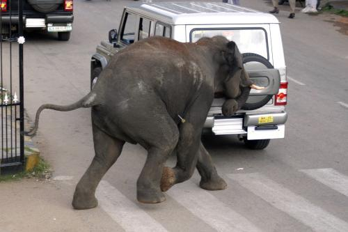 Rozzuřený slon