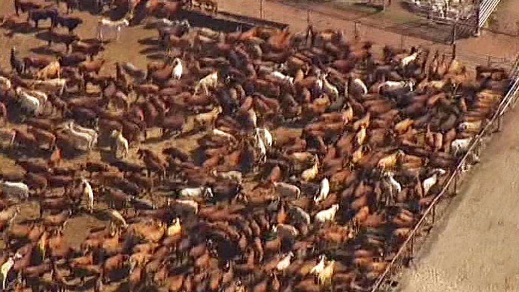 Australský ranč
