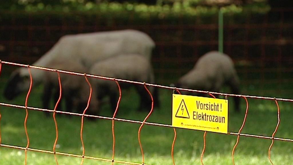 Protest německých chovatelů ovcí