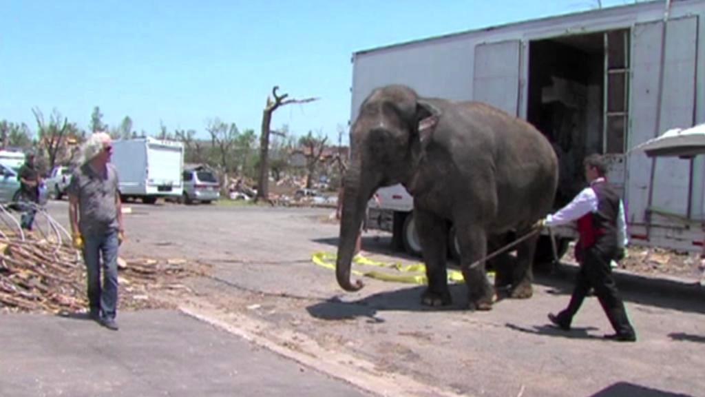 Cirkusový slon pomáhá uklízet trosky v Joplinu