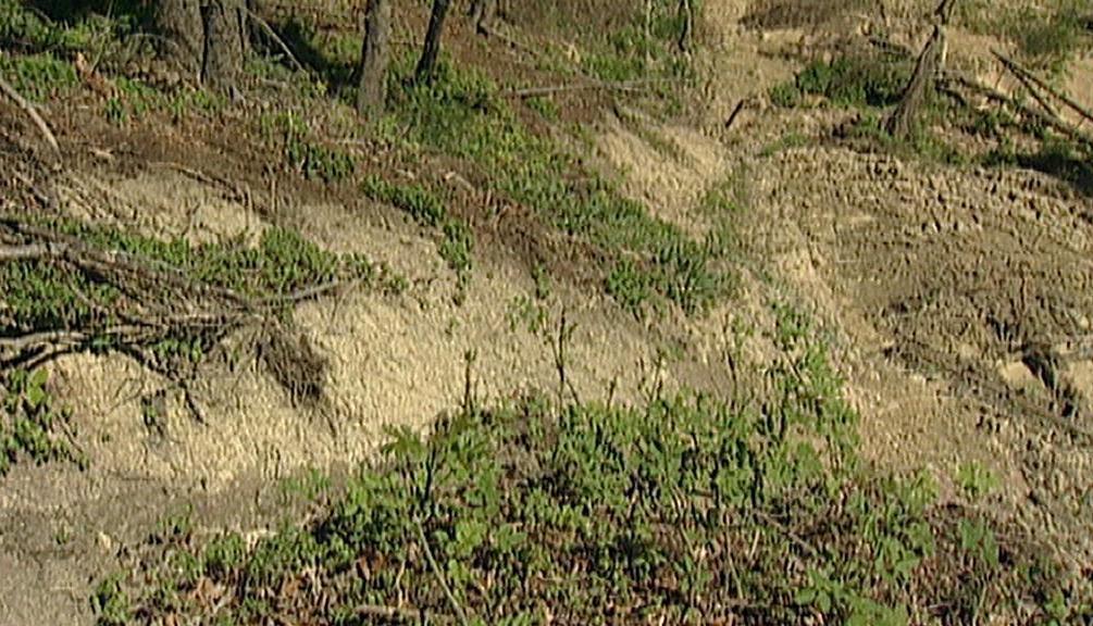 Eroze lesní půdy