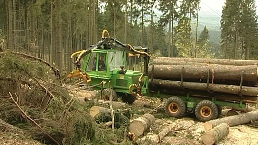 Nakládání dřeva