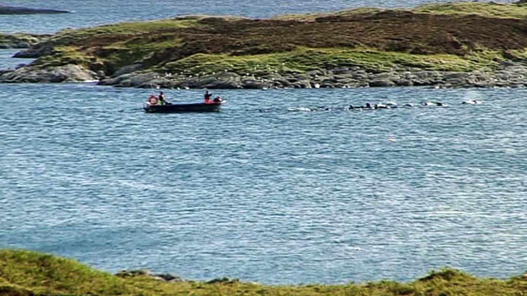 Hejno kulohlavců na severozápadě Skotska