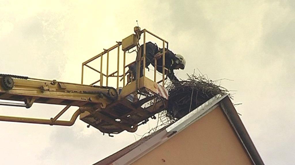 Záchrana vajec z čapího hnízda