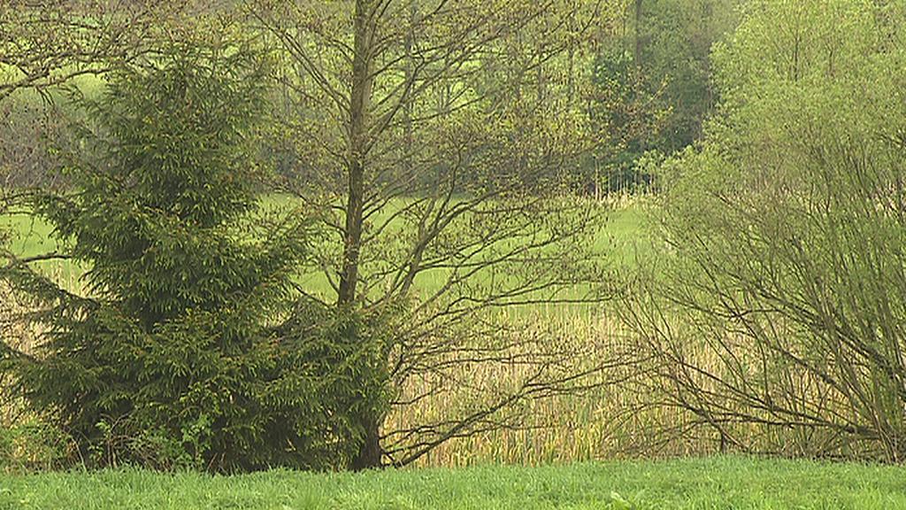 Jablonná – mokřad