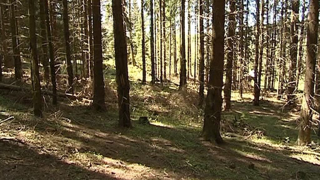 Les patřící obci Mnichov