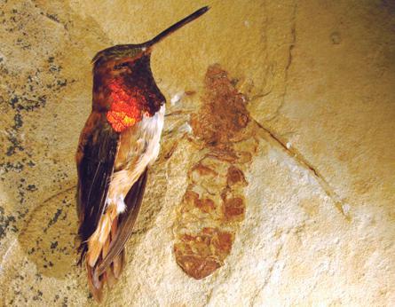 Fosilie mravence