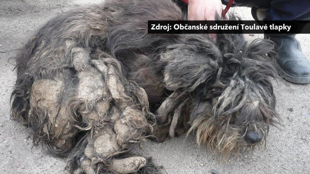 Vyhublý pes