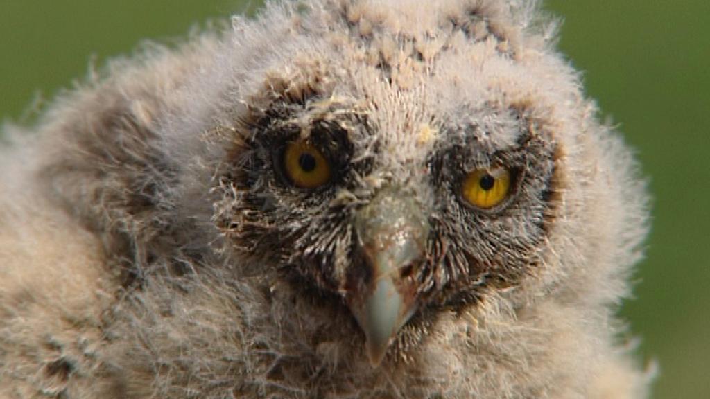 Závlahový systém v Josefovských loukách má pomoci ptactvu