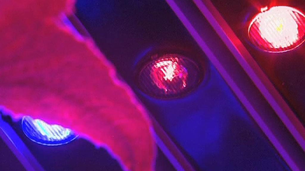 LED diody ve speciálních pěstírnách