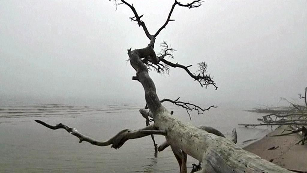 Panenská příroda