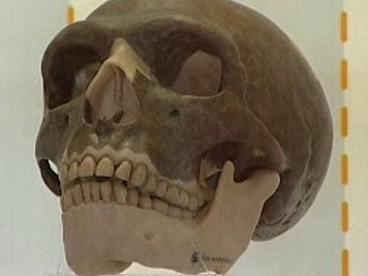 Lebka člověka neandertálského