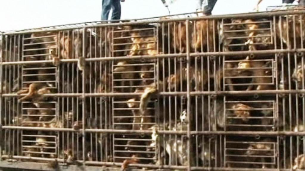 Týraní psi