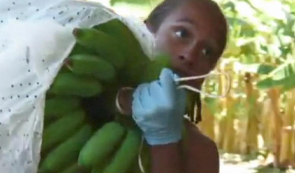 Práce na banánové plantáži