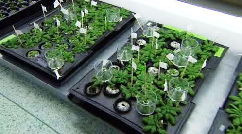 Výzkum rostlin