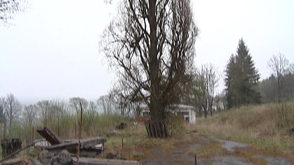 Stoletý dub