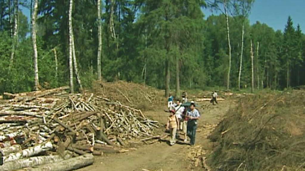 Les v Chimkách