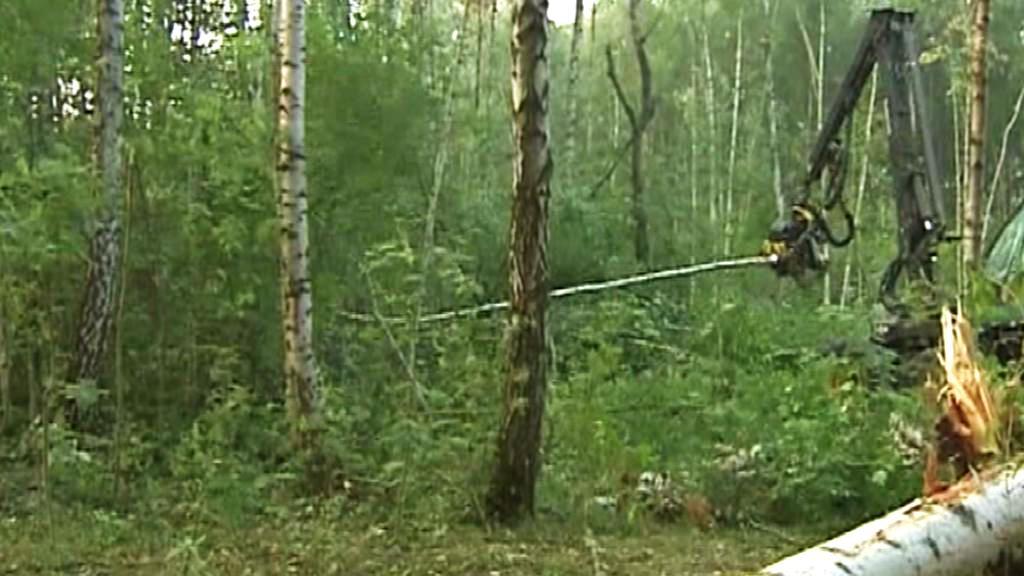 Kácení lesa v Chimkách