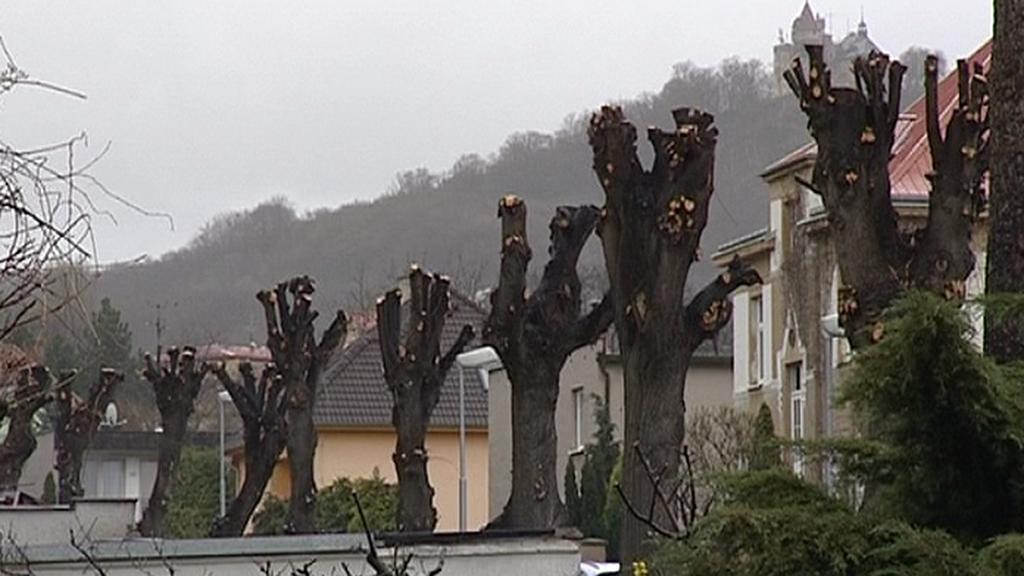 Prořezané stromy