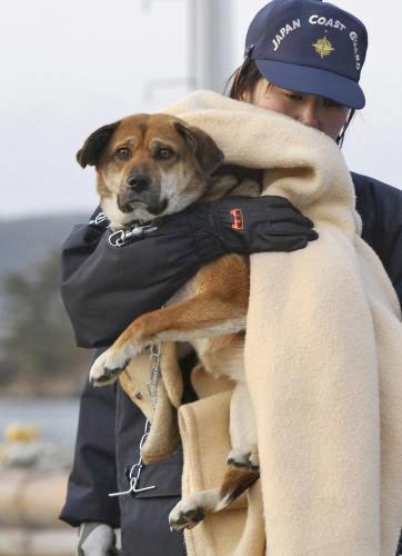 Zachráněný pes v Japonsku