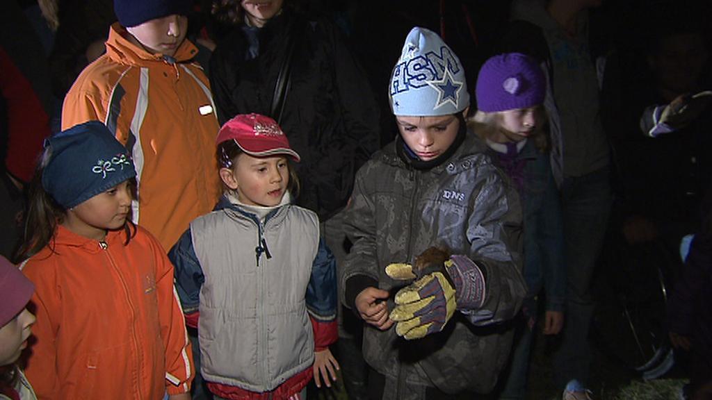 Děti vypouštějí netopýry