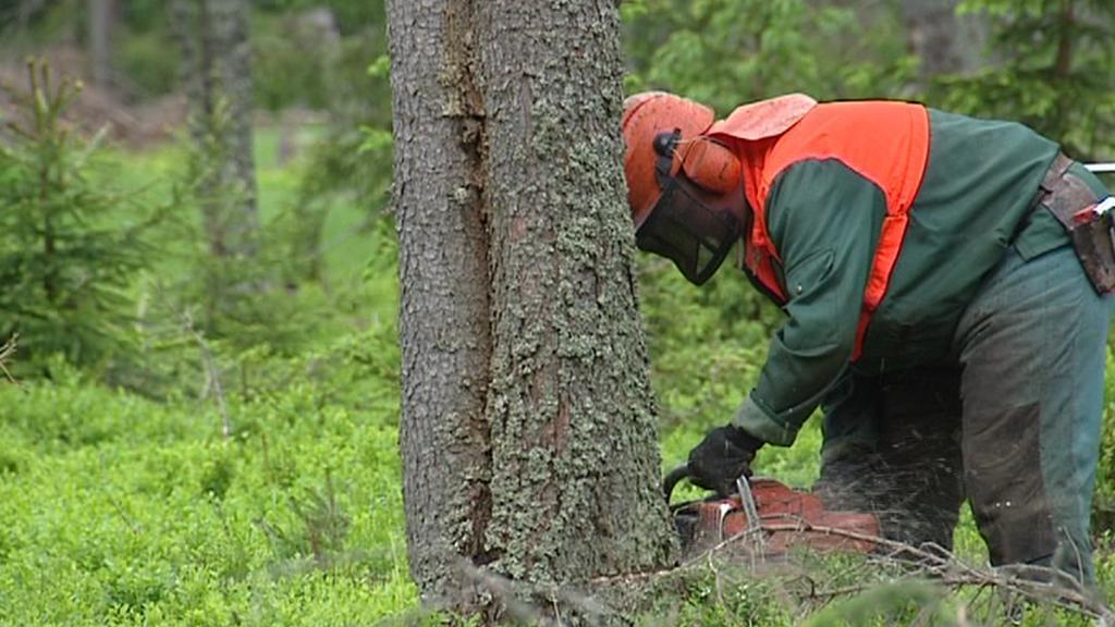 Kácení dřeva