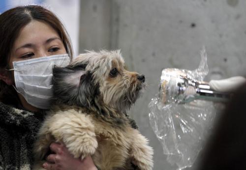 Měření radiace se nevyhnou ani zvířata