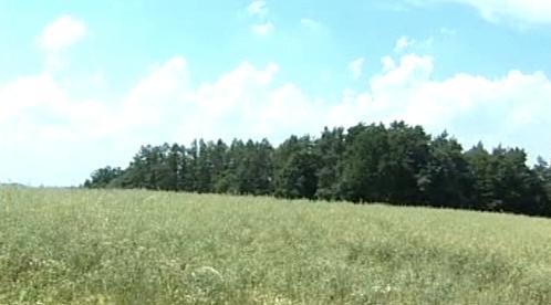 Les u Žďárku