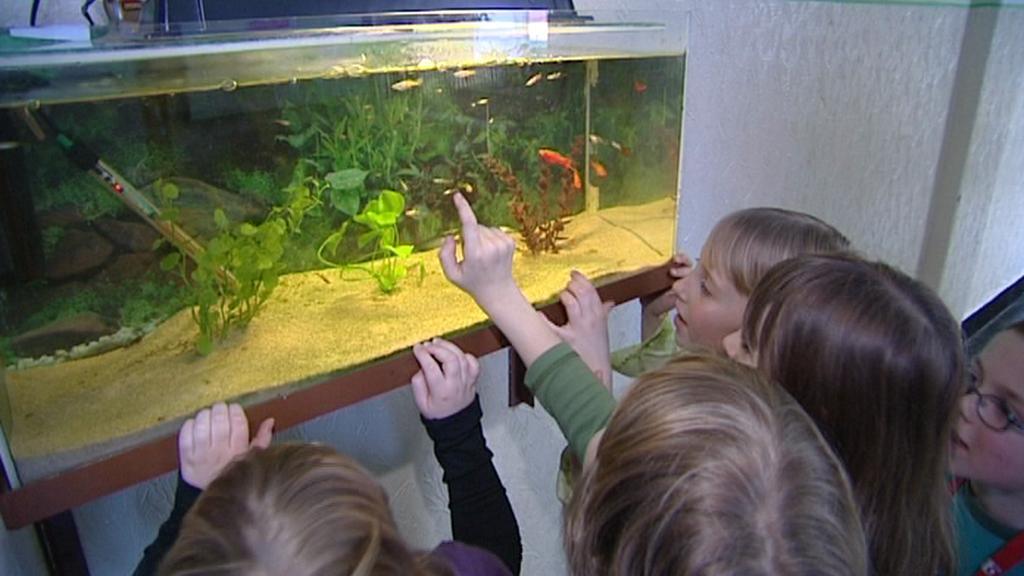Děti si prohlížejí školní akvárium