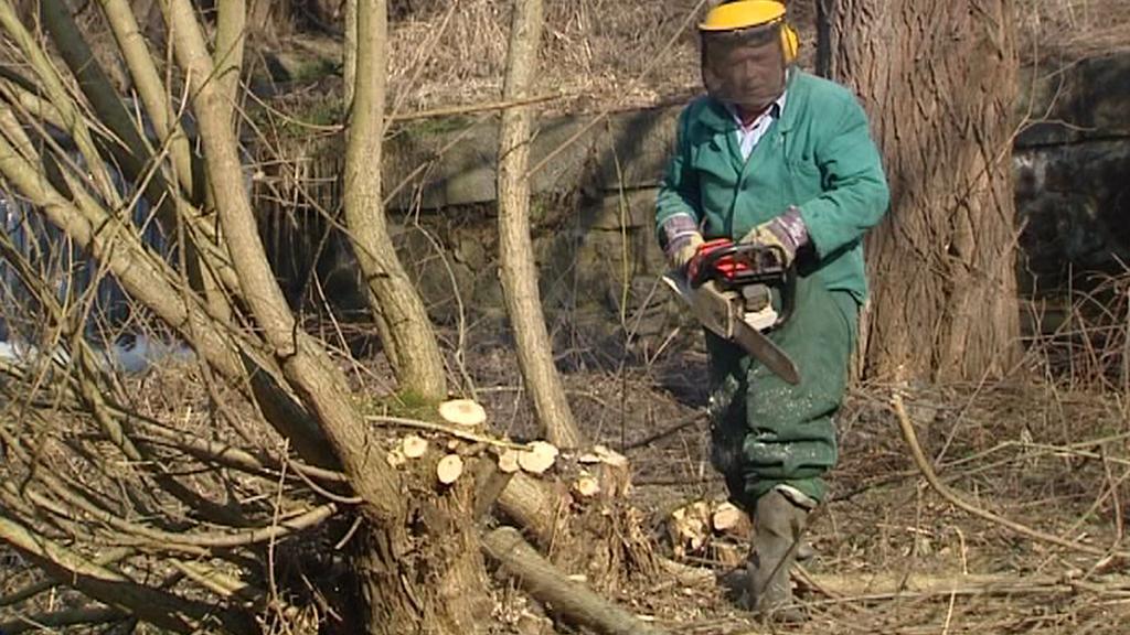 Kácení dřevin