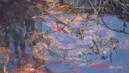 Potok zamořený lehkými topnými oleji