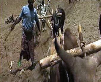 Zemědělství v nerozvinutých zemích